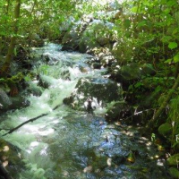 Elliot Creek microhydro site
